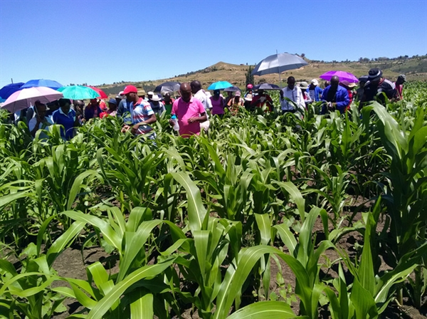 Improving food security in Lesotho through the proper use of herbicides
